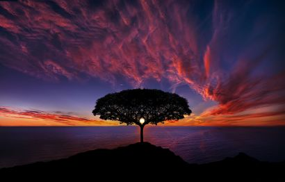 1280px-Tree_in_sunset