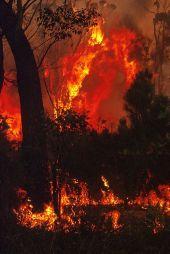 CSIRO_ScienceImage_10413_Project_Vesta_fire