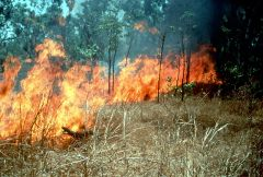 CSIRO_ScienceImage_392_Naturally_Occurring_Fire